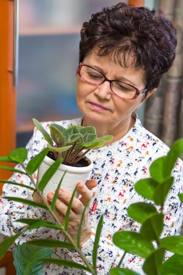 Mulher superior que toma das plantas em sua casa imagem de stock