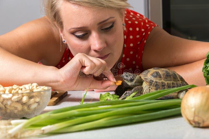 A mulher tenta alimentar a tartaruga do russo com parte de cenoura imagem de stock royalty free