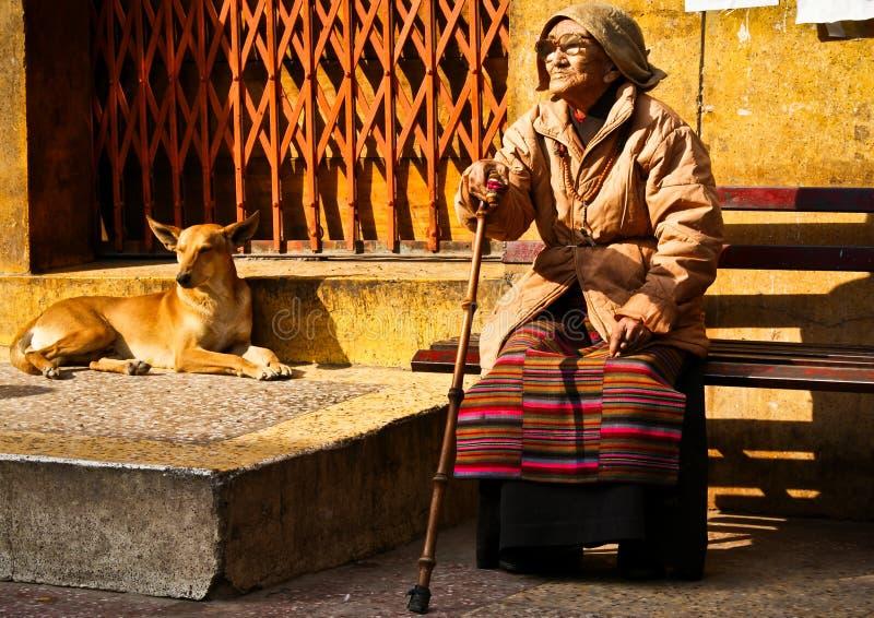 Mulher tibetana idosa com um cão, ka Tila de Majnu fotografia de stock