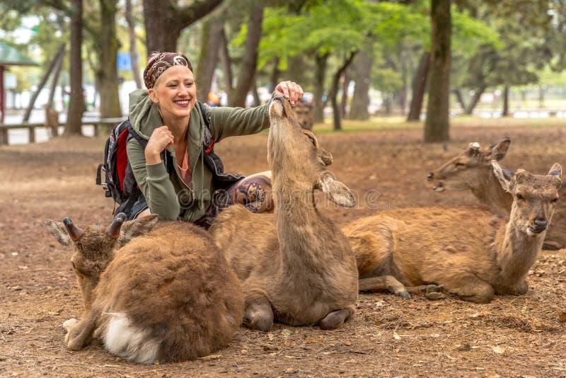 A mulher toca em cervos de Nara fotos de stock