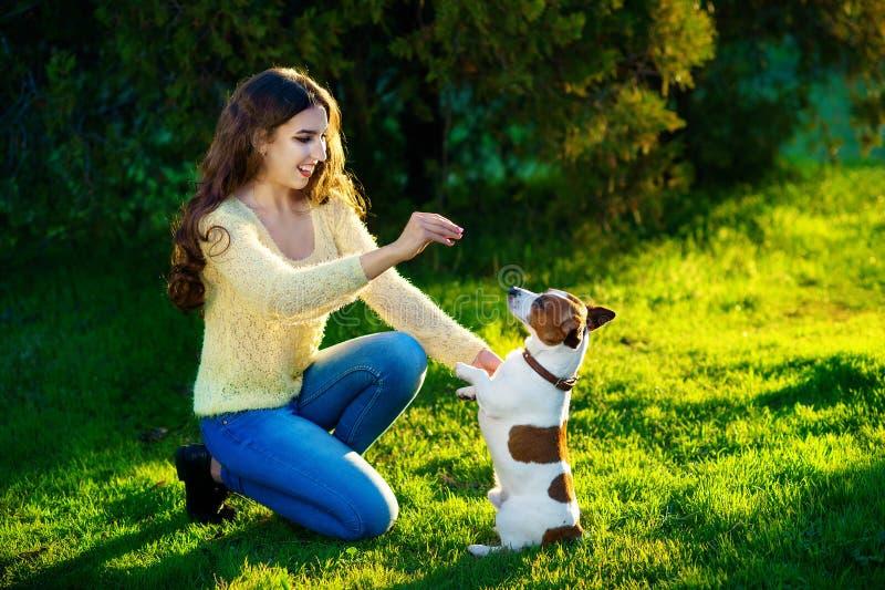 A mulher treina seu cão Jack Russell Terrier fotografia de stock