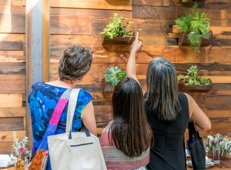 Mulheres e menina que apontam na luz, na madeira e nas plantas imagens de stock