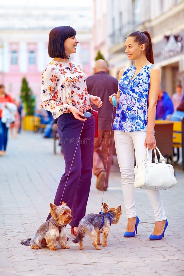 Mulheres felizes que andam os cães na rua da cidade foto de stock royalty free