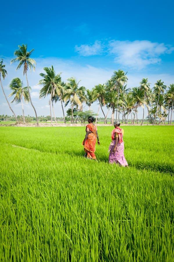 Mulheres indianas que vão trabalhar no campo do arroz India, Tamil Nadu, perto de Thanjavour imagem de stock