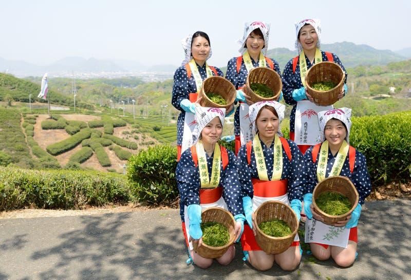 Mulheres japonesas que colhem as folhas de chá imagem de stock royalty free