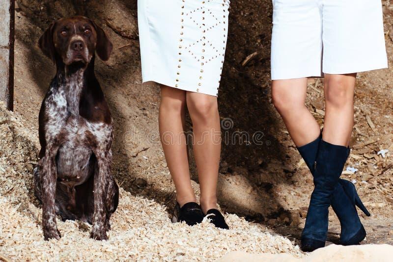 Mulheres que estão, parte mais inferior fotografada à cintura, sentando-se ao lado de um cão de caça alemão do curto-cabelo imagem de stock