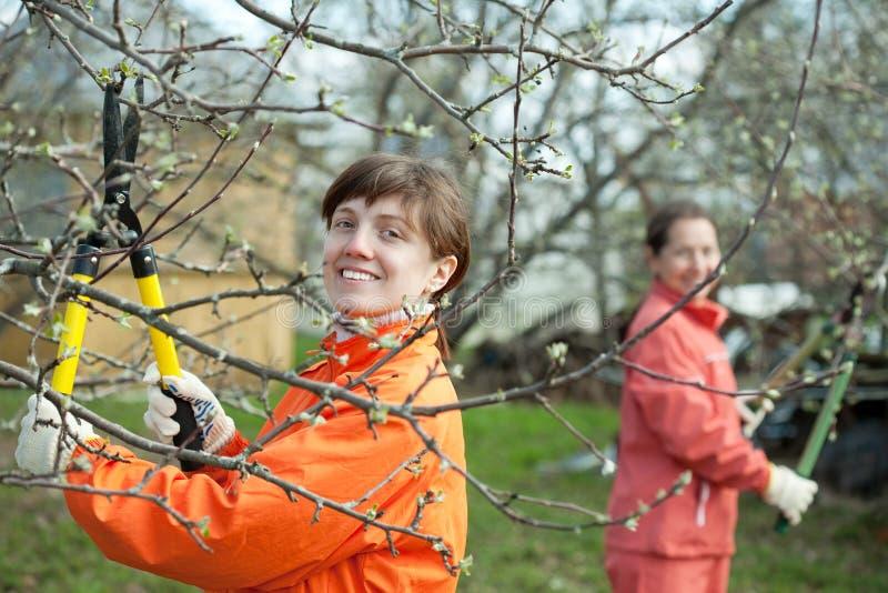 Mulheres que podam a árvore de frutas foto de stock