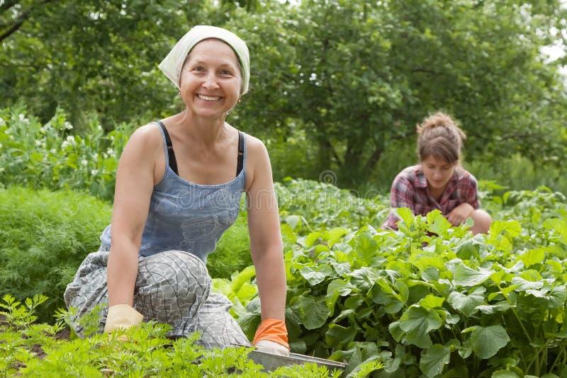 Mulheres que trabalham no jardim vegetal foto de stock