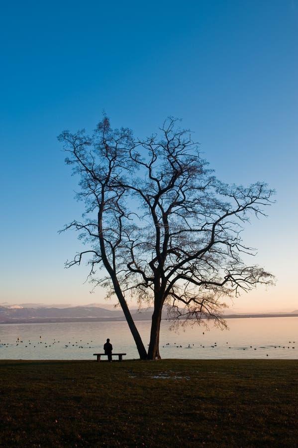 Mulheres sob uma árvore foto de stock royalty free