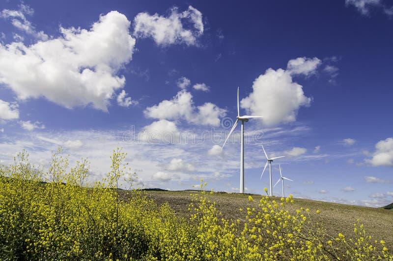 Mulini a vento con i fiori gialli fotografia stock libera da diritti
