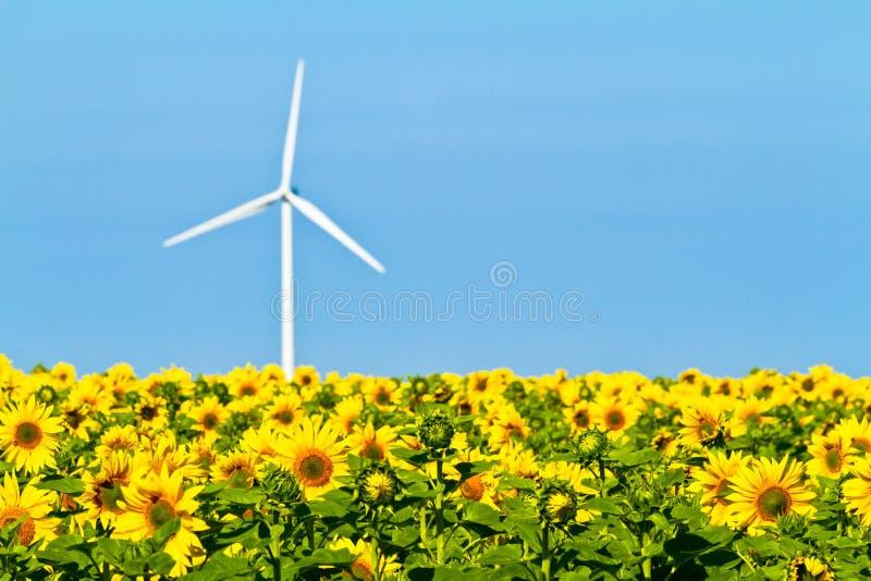 Mulini a vento e girasoli immagine stock