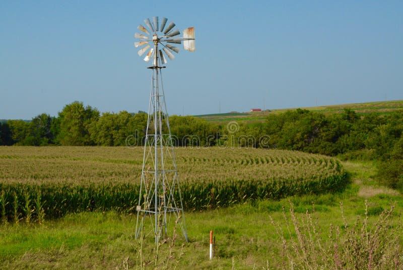 Mulino a vento & campo di mais fotografia stock libera da diritti