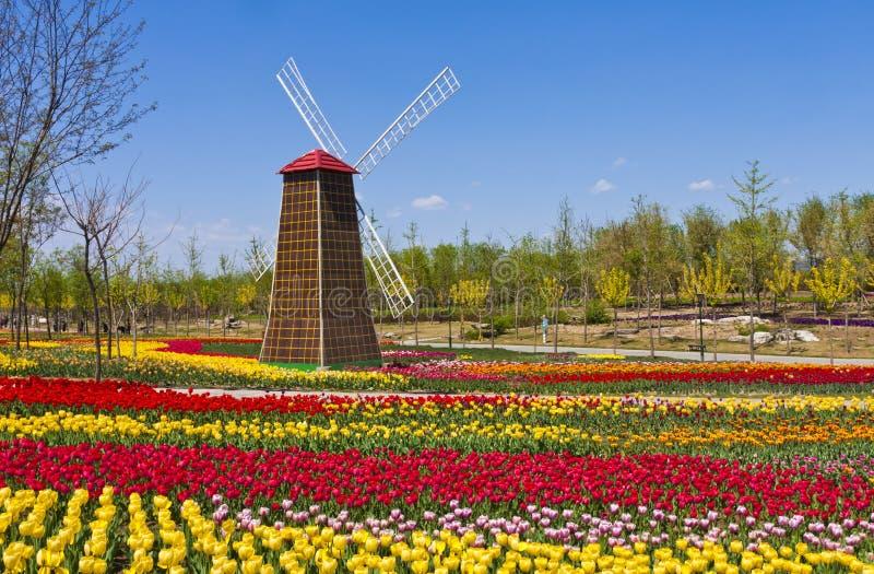 Mulino a vento con il campo del tulipano fotografie stock libere da diritti