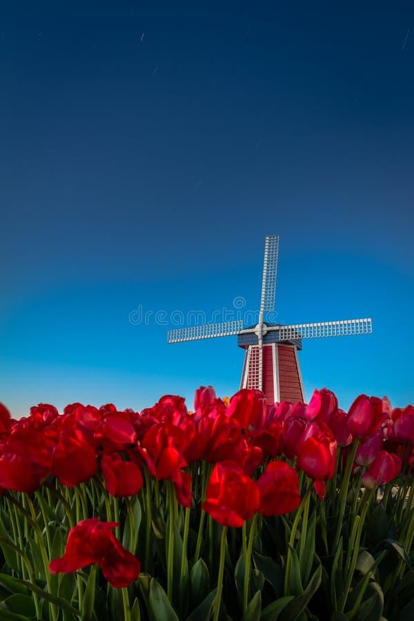 Mulino a vento e tulipani con il cielo notturno fotografie stock libere da diritti