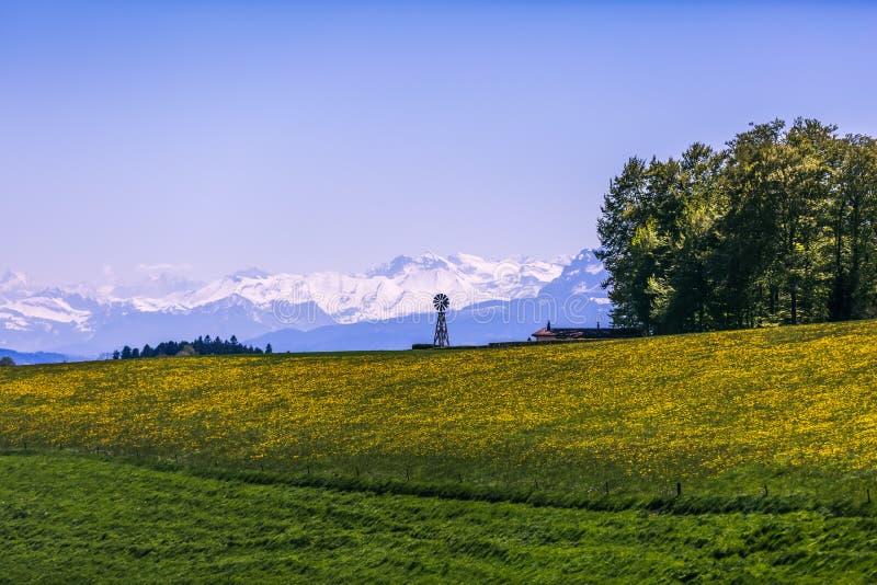 Mulino a vento, giacimento di fiore giallo e montagne di Snowy su Sunny Sprin fotografia stock