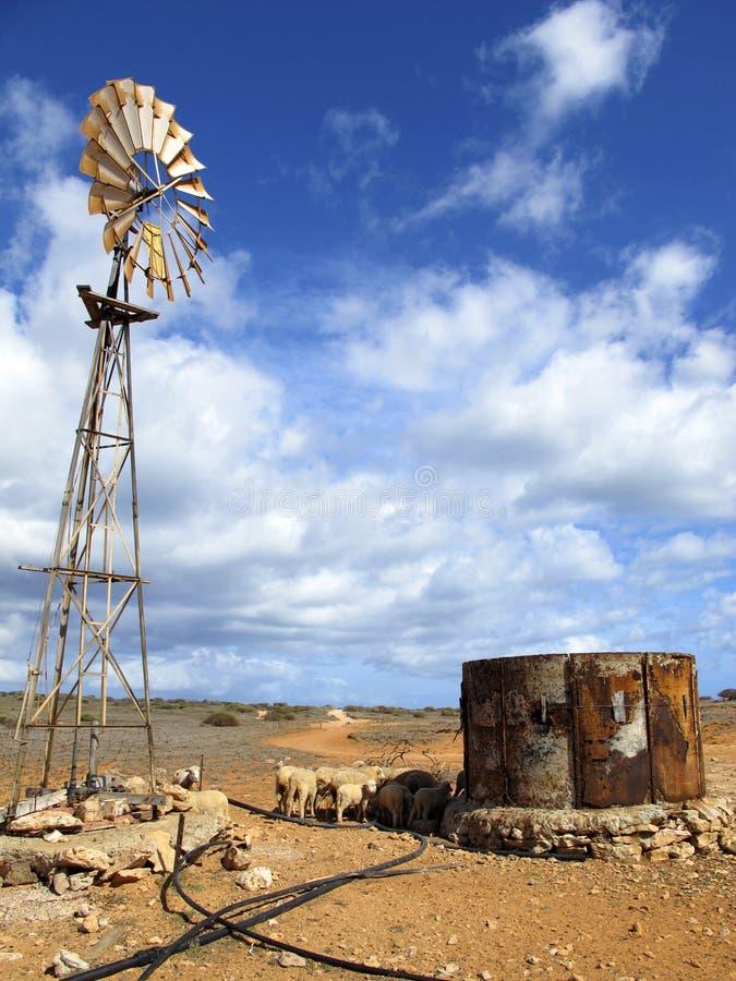 Download Mulino A Vento Nell'entroterra, Australia Immagine Stock - Immagine di pecore, cambiamento: 55363289