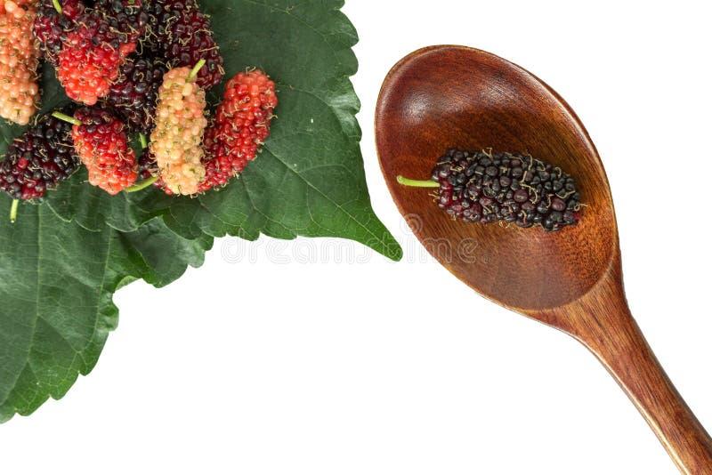 Mullbärsträd för selektiv fokus på träskeden och suddig mullbärsträd royaltyfri fotografi