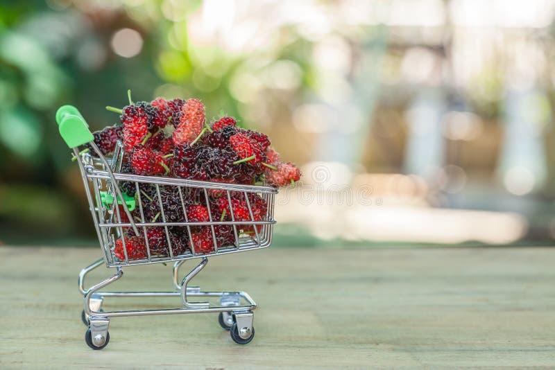 Mullbärsträd i shoppingvagn royaltyfria foton