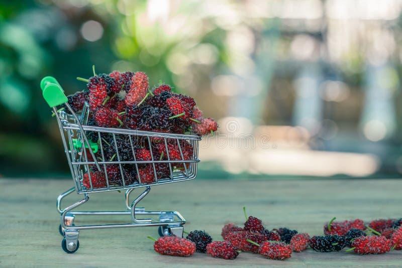 Mullbärsträd i shoppingvagn fotografering för bildbyråer