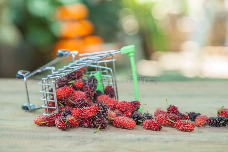 Mullbärsträd i shoppingvagn arkivfoto