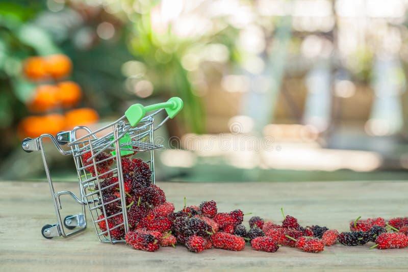 Mullbärsträd i shoppingvagn royaltyfri foto