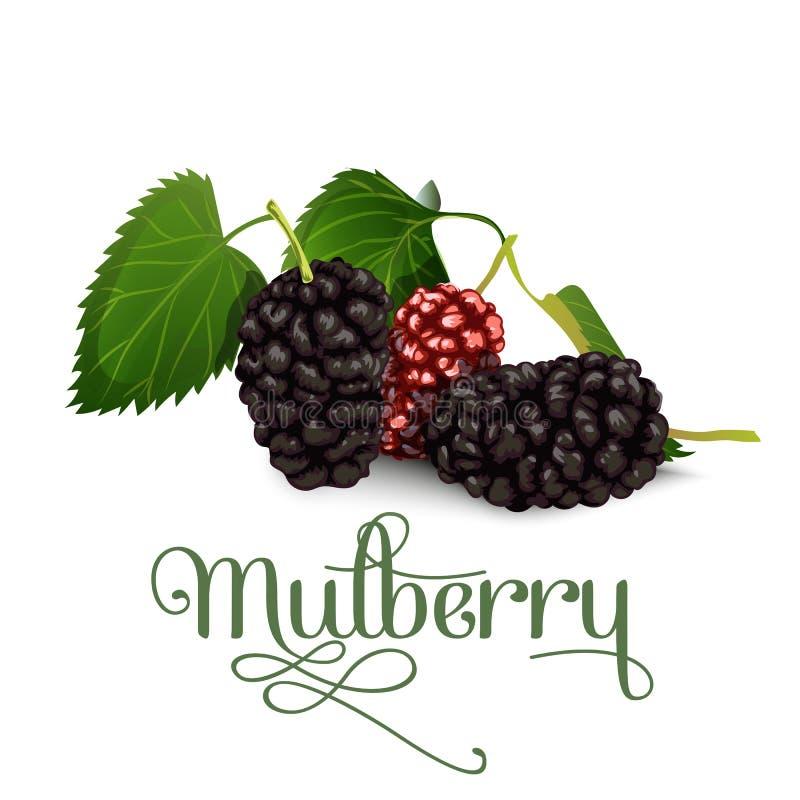 mullbärsträd också vektor för coreldrawillustration stock illustrationer