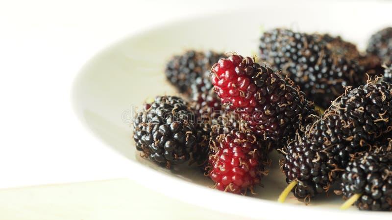 Mullbärsträdfrukt royaltyfria bilder
