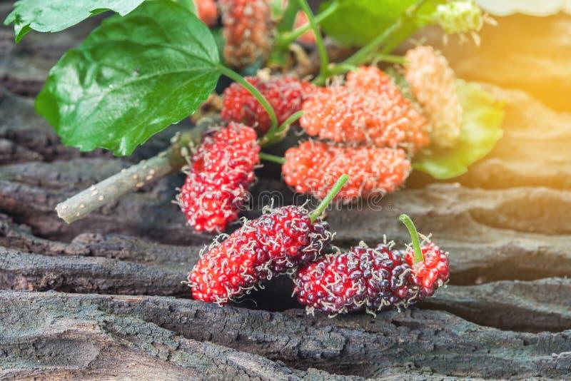 Mullbärsträdfrukt på träbakgrund selektivt arkivbild