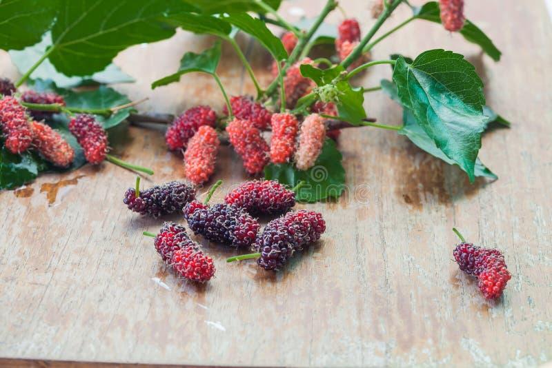 Mullbärsträdfrukt på träbakgrund selektivt royaltyfri fotografi