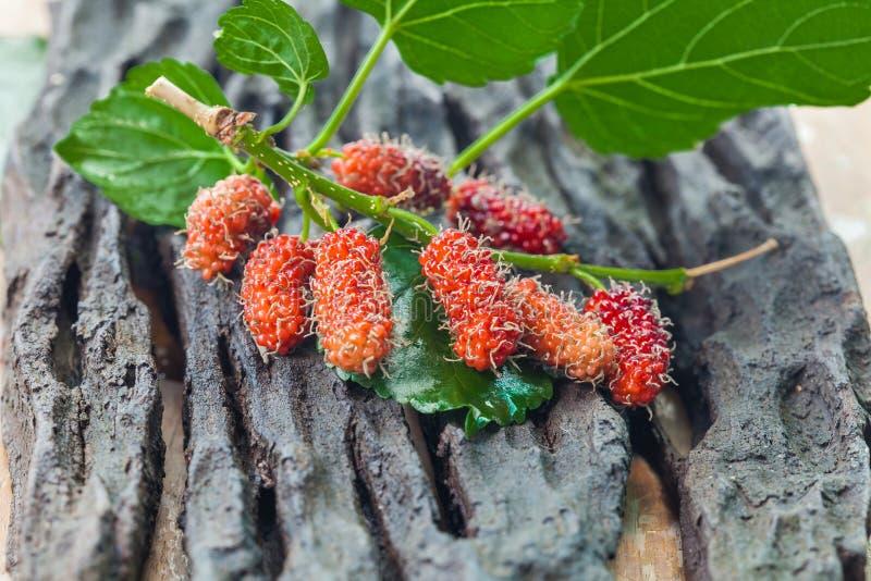 Mullbärsträdfrukt på träbakgrund selektivt fotografering för bildbyråer