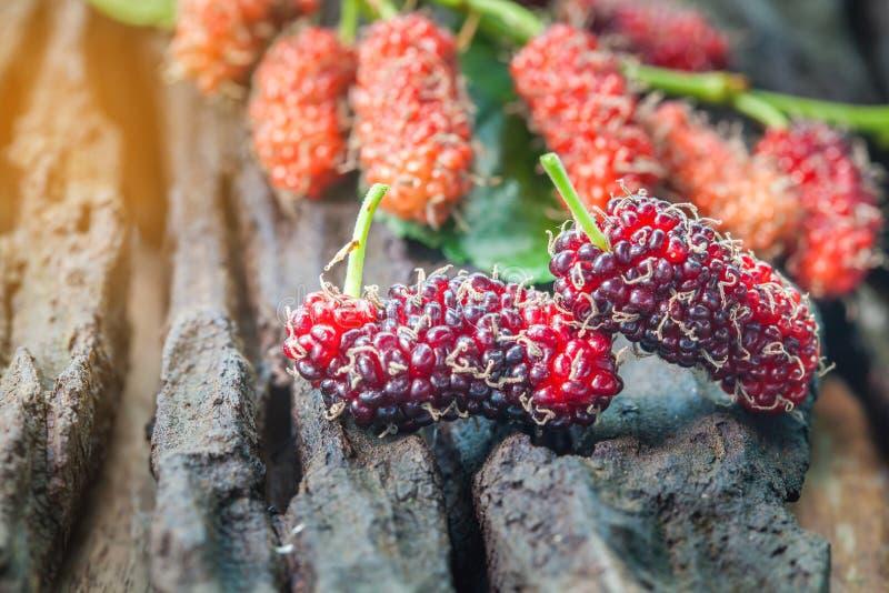 Mullbärsträdfrukt på träbakgrund selektivt royaltyfria foton