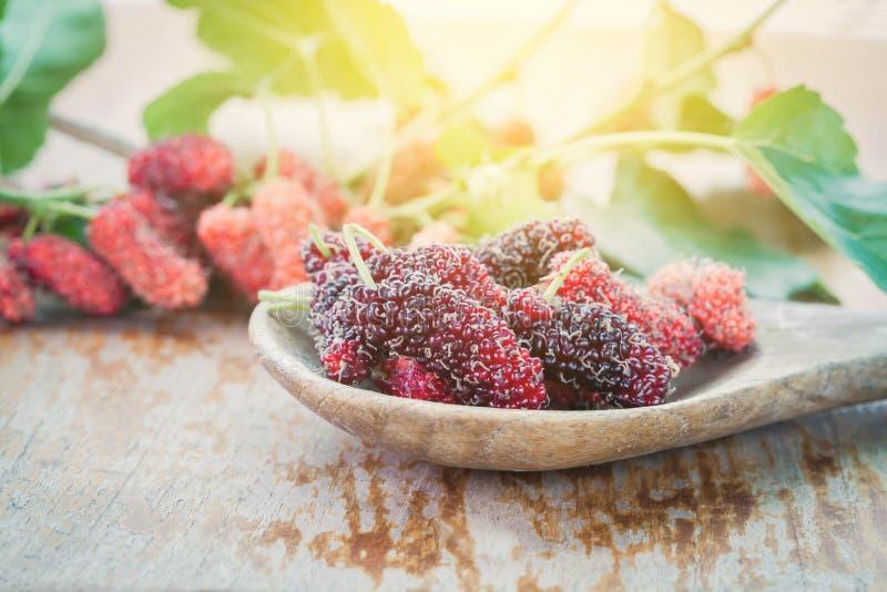 Mullbärsträdfrukt på träskeden arkivbild