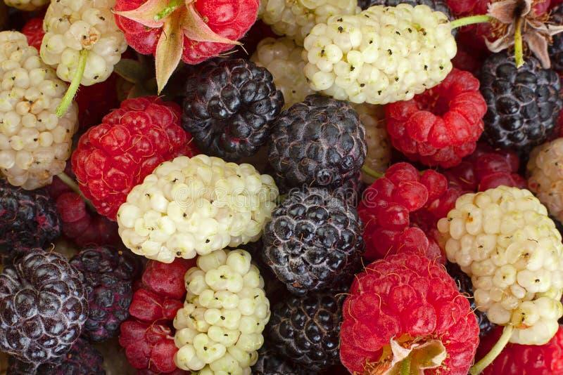 Mullbery de la frambuesa y frutas del Cumberland fotos de archivo libres de regalías