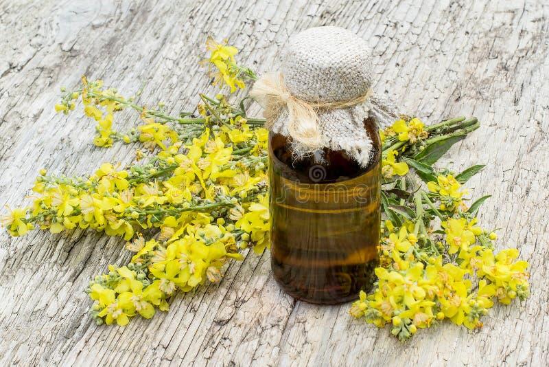 Mullein (Verbascum) och farmaceutisk flaska arkivbilder