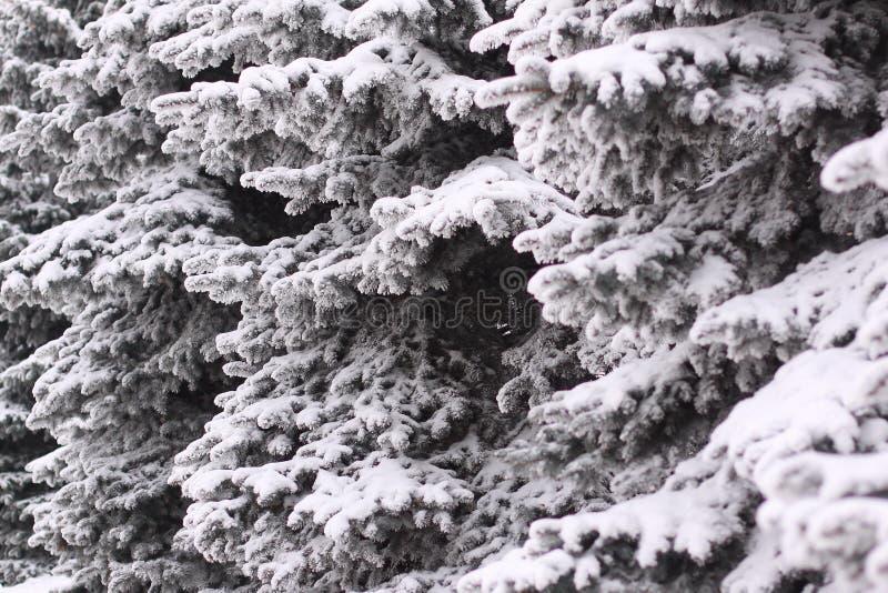 Mullido comi? en la nieve en un d?a de invierno fotografía de archivo libre de regalías
