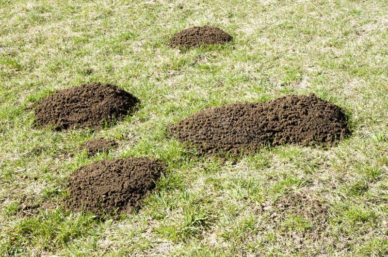 Mullvadshög på grönt fält i vår royaltyfri bild