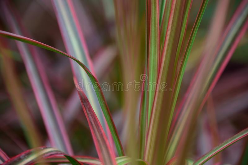 Mult-colored leaves royalty free stock images