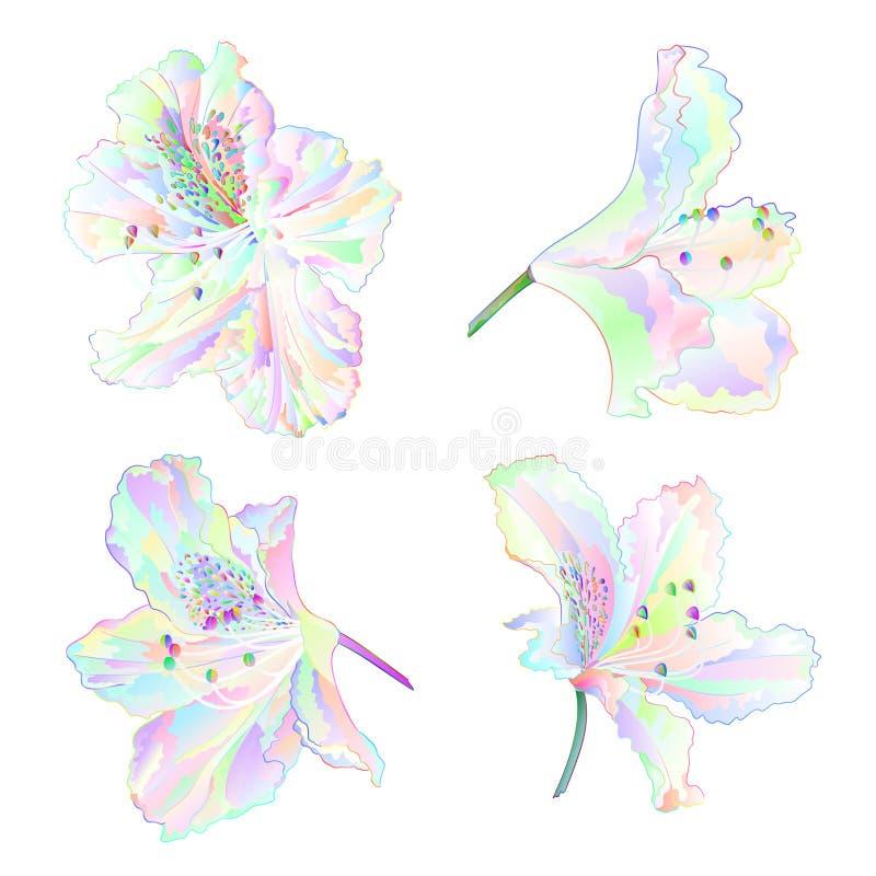 Multi arbusto colorido da montanha dos rododendros das flores em uma ilustração branca do vetor do vintage do grupo um do fundo e ilustração royalty free