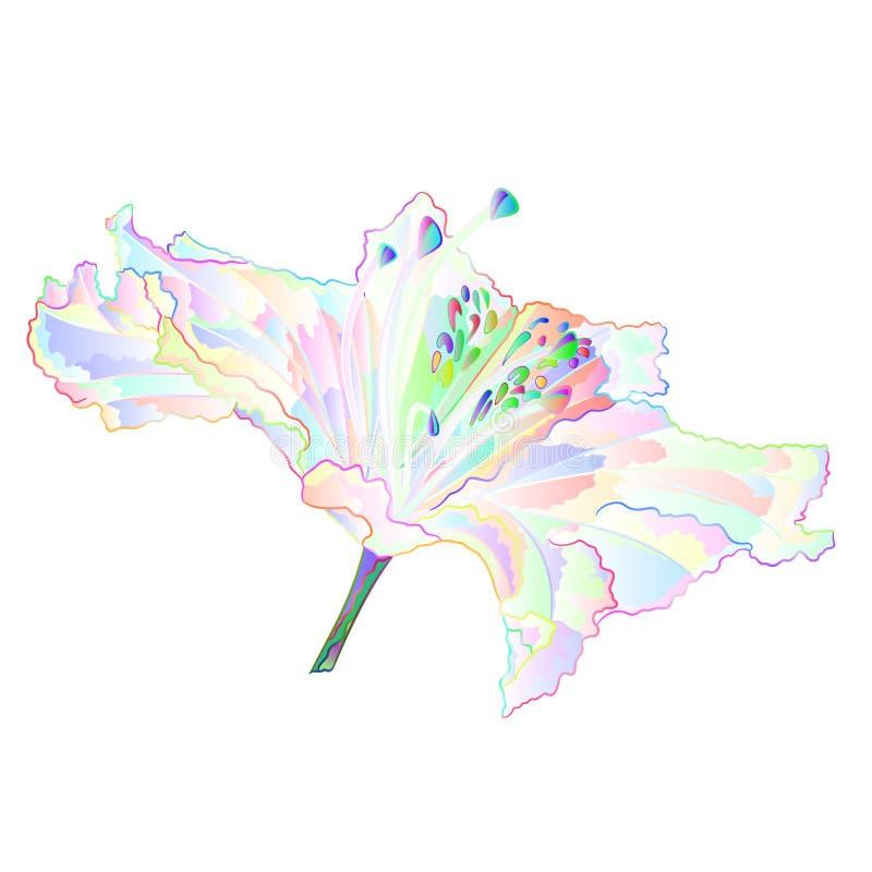 Multi arbusto colorido da montanha da flor da luz do rododendro em uma ilustração branca do vetor do vintage do fundo editável ilustração stock