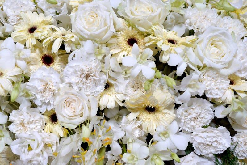 Multi Blume auf Wand lizenzfreie stockfotos