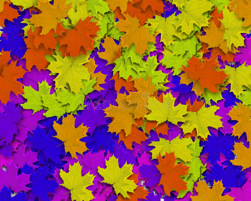 Multi Color Autum Background stock photography