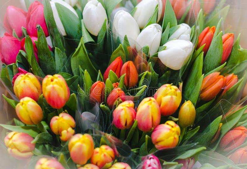 Multi-color bouquets of tulips - top view stock photography