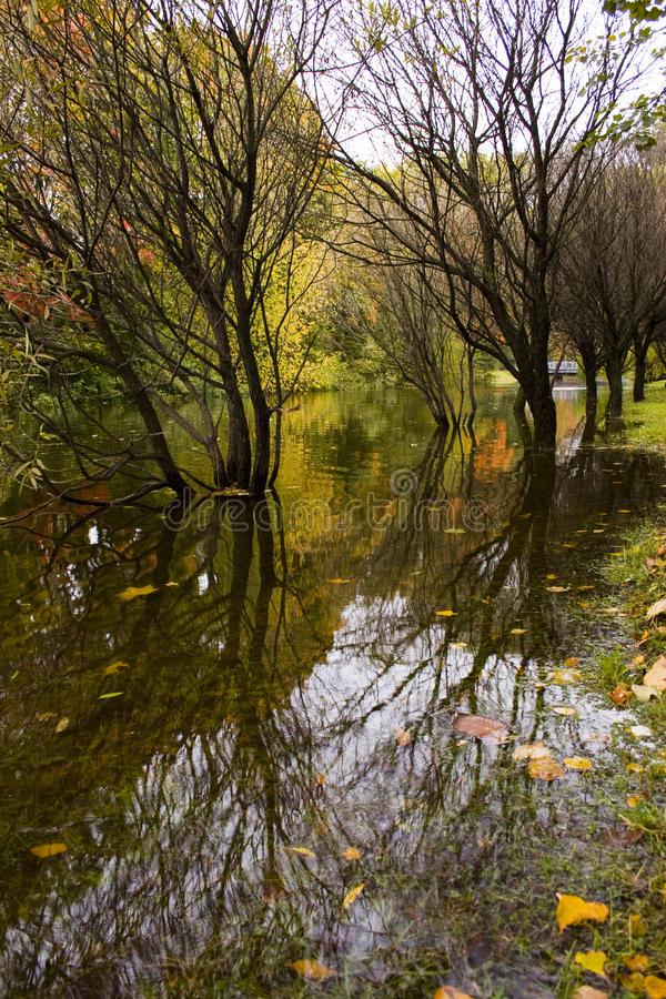 Multi-colored autumn trees reflected in water royalty free stock photos