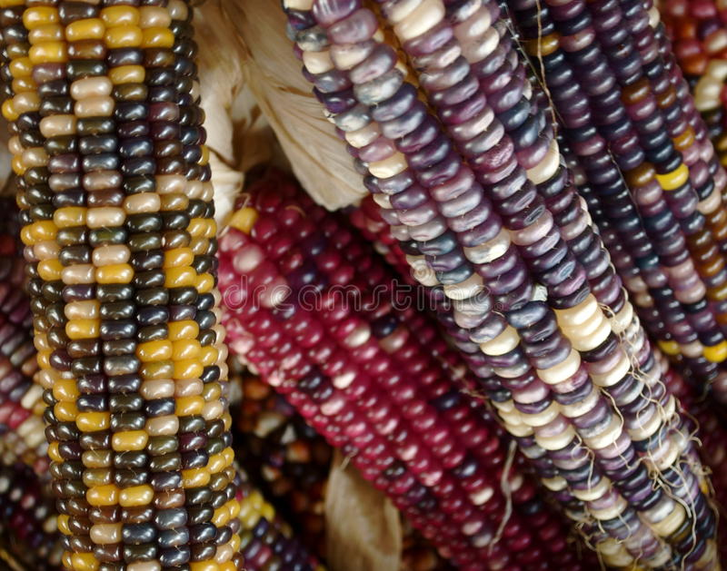 Download Multi Colored Corn Royalty Free Stock Photos - Image: 11120958