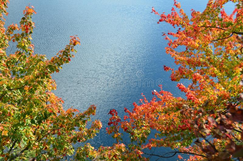 Multi-colored fall leaves against blue water in New England. Multi-colored fall leaves against blue water in a calm New England scene stock photo