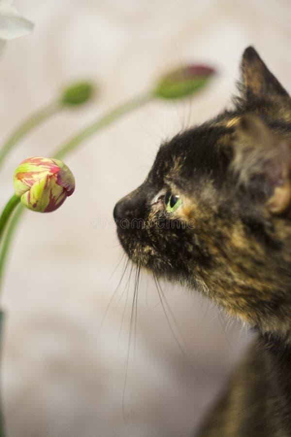 Multi-colored kat op een grijze achtergrond royalty-vrije stock fotografie