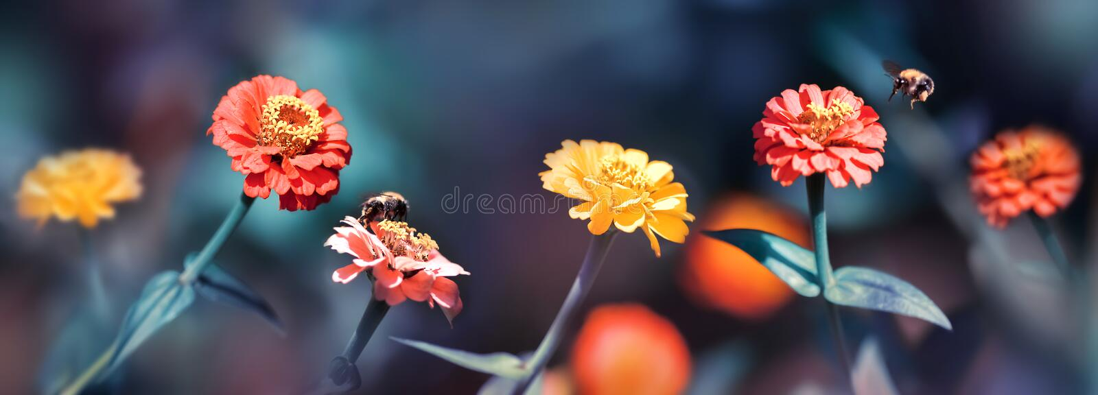 Multi-colored summer flowers and bumblebees in a fairy garden. Banner format. Artistic summer spring image. Multi-colored summer flowers and bumblebees in a royalty free stock image