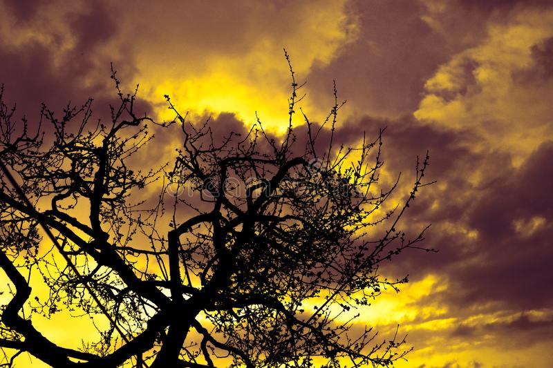 Multi colored sunset with a silhouette tree line and fire clouds stock image