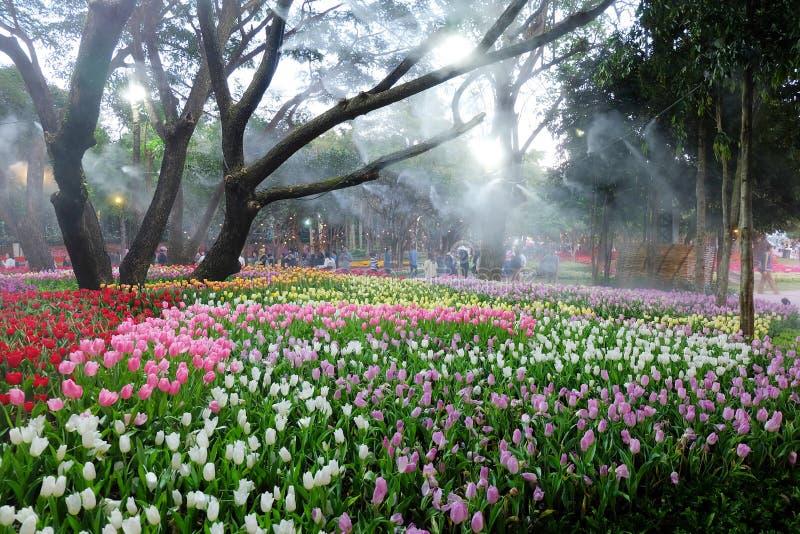 Multi-colored tulpengebied, Kleurrijke Tulip Field stock fotografie