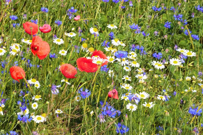 Multi colored wildflower meadow lying in sunlight stock photo
